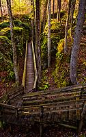 Boardwalk view in Beartown State Park, West Virginia