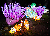 BNPS.co.uk (01202 558833)<br /> Pic: PhilYeomans/BNPS<br /> <br /> The spectacular undersea section of the Festival. <br /> <br /> As the clocks go back the lights come on at Longleat House in Wiltshire - as the hugely popular Festival of Light switches on.<br /> <br /> The English country estate is transformed with 800 illuminated lanterns to take visitors on a magical journey around the world and under the sea.<br /> <br /> Staff at the popular park attraction say this is their most ambitious event yet, with a team of highly-skilled Chinese artists spending more than 7,000 hours to complete the different stories for A Fantastic Voyage.<br /> <br /> The displays have used more than 25 miles of silk and LED lighting strips, as well as more than 60,000 light bulbs.