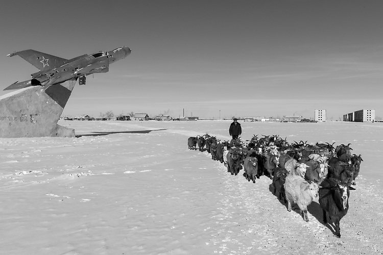 Animal in Mongolia, Dogs, Camels, Cows, Bulls, goats, Horses, Eagles, Power plants, winter
