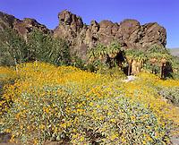 Desert Scenics, Desert Scenics