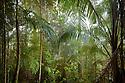 Dense tropical rainforest inside the Maliau Basin. Sabah, Borneo, Malaysia. Maliau Basin, Sabah's 'Lost World', Borneo, Malaysia.