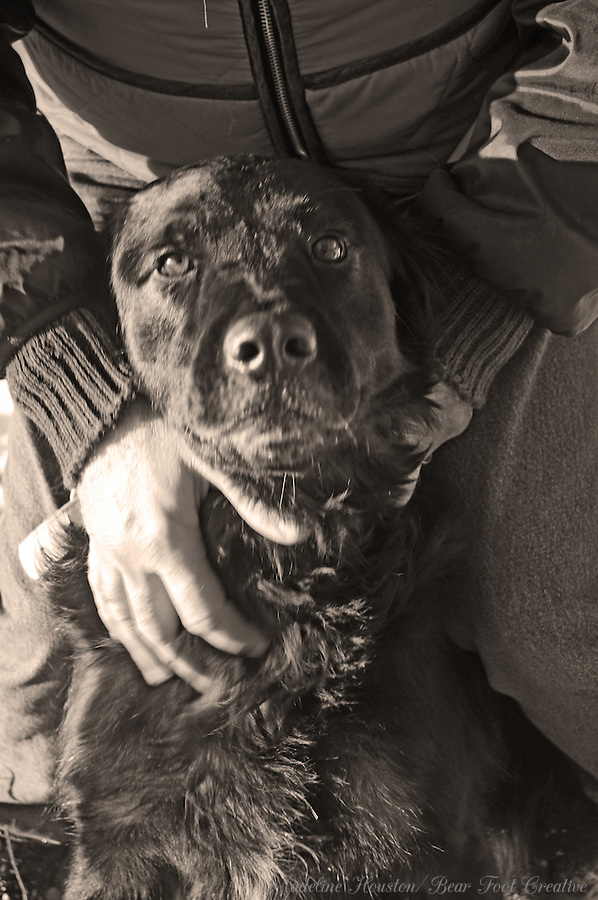 A black dog looks forward while being stroked by a man's hands.