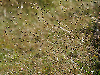 The coming and going of bees during a massive return to the hive. A bee transports 20 to 30 milligrams of nectar and carries out 3 to 10 flights per day during 10 to 20 days of activity. A hive has between 100,000 and 200,000 foraging bees and thus harvests between 60 kilos and 300 kilos of honey per year.<br /> Va et viens des abeilles lors d'un retour massif à la ruche. Une abeille transporte de 20 à 30 milligrammes de nectar et effectue de 3 à 10 vols par jour pendant 10 et 20 jours d'activité. Une ruche a entre 100 000 et 200 000 butineuses et récolte ainsi entre 60 kilos et 300 kilos de miel par an.
