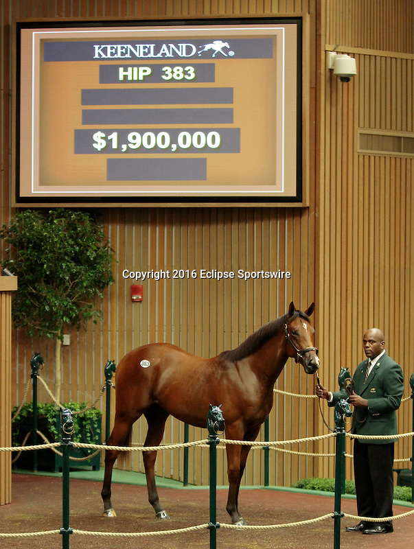 LEXINGTON, KY - September 13: Hip # 383 War Front - Havre De Grace Colt consigned by Timber Town RNA'd for $1,900,000 at the September Yearling sale at Keeneland.  September 13, 2016 in Lexington, KY (Photo by Candice Chavez/Eclipse Sportswire/Getty Images)