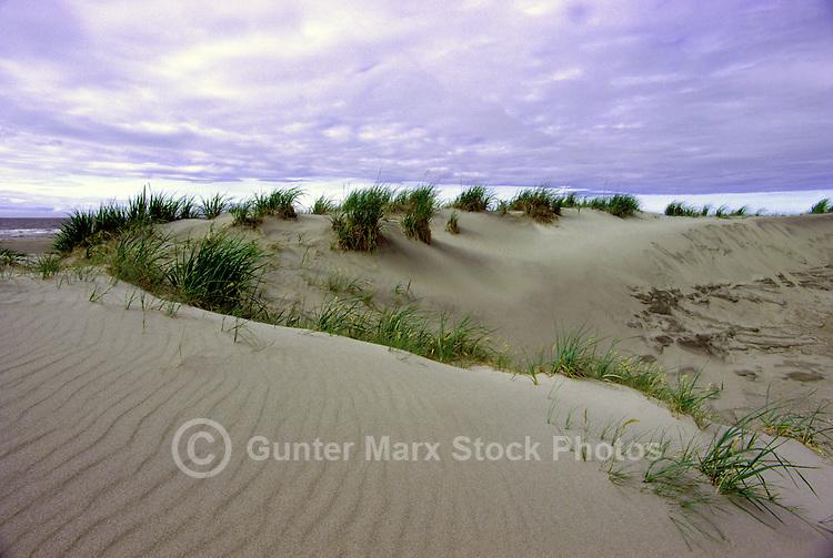 Queen Charlotte Islands (Haida Gwaii), Northern BC, British Columbia, Canada - Sand Dunes on North Beach along McIntyre Bay, Naikoon Provincial Park, Graham Island