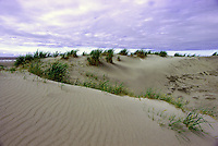 Queen Charlotte Islands (Haida Gwaii), Northern BC, British Columbia, Canada - Sand Dunes on North Beach along McIntyre Bay, Naikoon Provincial Park, Graham Island