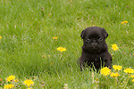 Black Pug Shopping cart has 3 Tabs:<br />