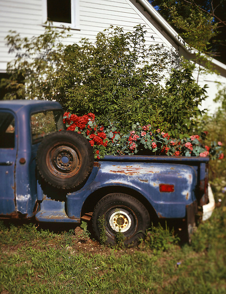 In Door County, Wisconsin, flowers grow in an abandoned pickup truck. Photo by Kevin J. Miyazaki/Redux