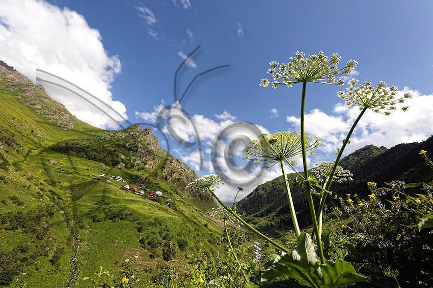 On the Ayder plateau near Mount Kaskar, the pasture lands situated at more than l2000 metres altitude are rich in a flora that counts more than 350 species of flowers.///Sur le plateau d'Ayder,près du Mont Kaskar, les pâturages situés à plus de 2000 mètres d'altitude sont riches d'une flore qui compte plus de 350 espèces de fleurs.