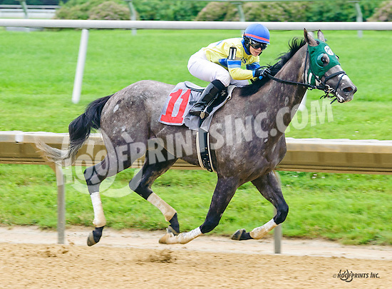 Jackson P winning at Delaware Park on 6/16/16