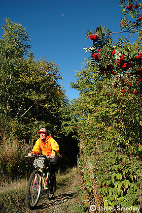 Hunter on a bicycle on a bush road