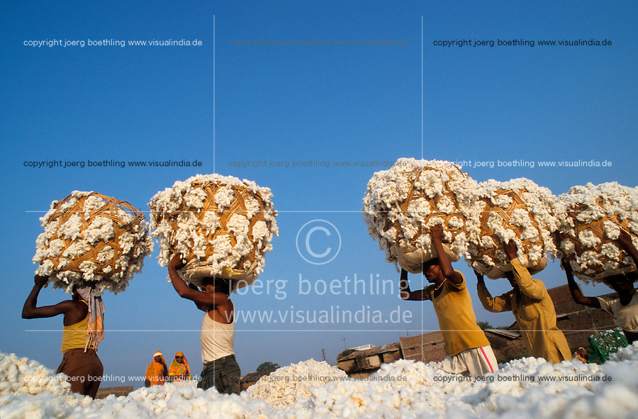 INDIA Madhya Pradesh, Khargoan, Maikaal organic cotton project, worker carry harvested bio cotton in baskets into ginning factory