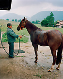 SWITZERLAND, Motiers, Lutin gives his horse Clatiola a rinse after training on the track, Jura Region