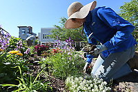 NWA Democrat-Gazette/J.T. WAMPLER Willa Thompson of Fayetteville works in the square garden Monday May 13, 2019 on the Fayetteville square. Thompson works for the parks and recreation department. he National Weather Service is calling for a slight chance of rain today ((TUESDAY MAY 14)) then clear skies for the rest of the week with high temperatures in the 80s.
