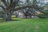 These great oaks were massive and many were over 300 years old and were planted before the house and plantation existed. It is early morning and the early morning fog just lifted.