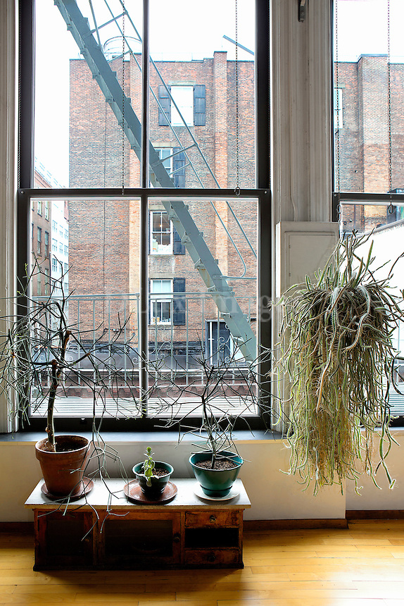 plants next to the window