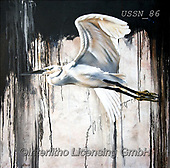 Sandi, REALISTIC ANIMALS, REALISTISCHE TIERE, ANIMALES REALISTICOS, paintings+++++abstractegretbjpg,USSN86,#a#, EVERYDAY,heron ,puzzles
