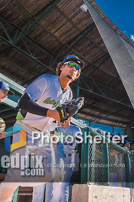 31 July 2016: Vermont Lake Monsters outfielder Luis Barrera emerges from the dugout to take the field for a game against the Connecticut Tigers at Centennial Field in Burlington, Vermont. The Lake Monsters edged out the Tigers 4-3 in NY Penn League action.  Mandatory Credit: Ed Wolfstein Photo *** RAW (NEF) Image File Available ***