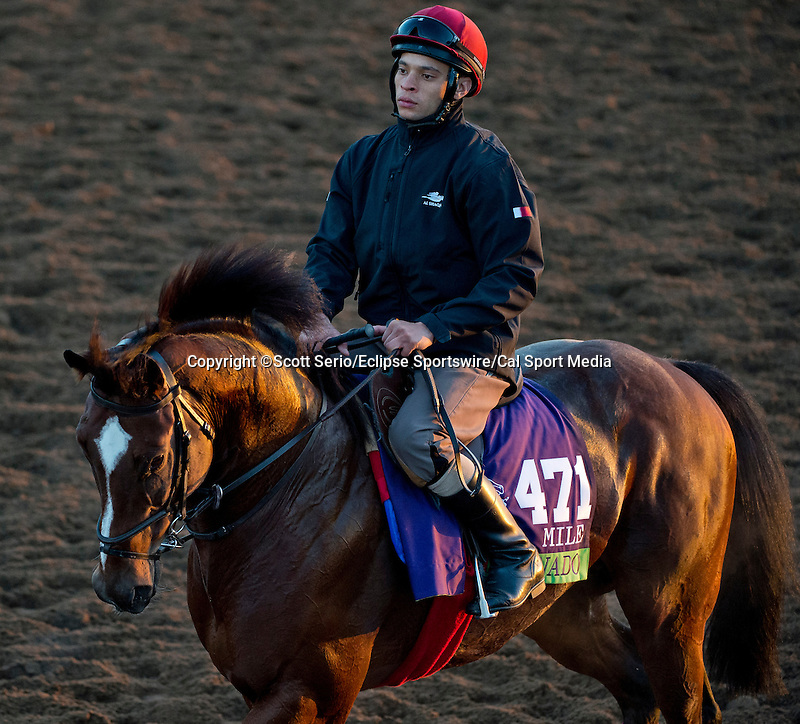October 28, 2014:  Toronado, trained by Richard Hannon Jr., exercises in preparation for the Breeders' Cup Mile at Santa Anita Race Course in Arcadia, California on October 28, 2014. Scott Serio/ESW/CSM