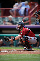 Altoona Curve catcher Jason Delay (14) during an Eastern League game against the Erie SeaWolves and on June 4, 2019 at UPMC Park in Erie, Pennsylvania.  Altoona defeated Erie 3-0.  (Mike Janes/Four Seam Images)