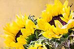 Sunflowers in Boston, Massachusetts, USA