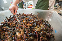 NWA Democrat-Gazette/ANTHONY REYES &bull; @NWATONYR<br /> Crawfish are spooned into a basket Wednesday, April 15, 2015 to be cooked at The Hive, inside the 21C hotel in Bentonville. Many boils happen this time of year. The Hive's boil featured a four course meal with crawfish flown in fresh from the gulf coast. Chef Matt McClure created each dish.