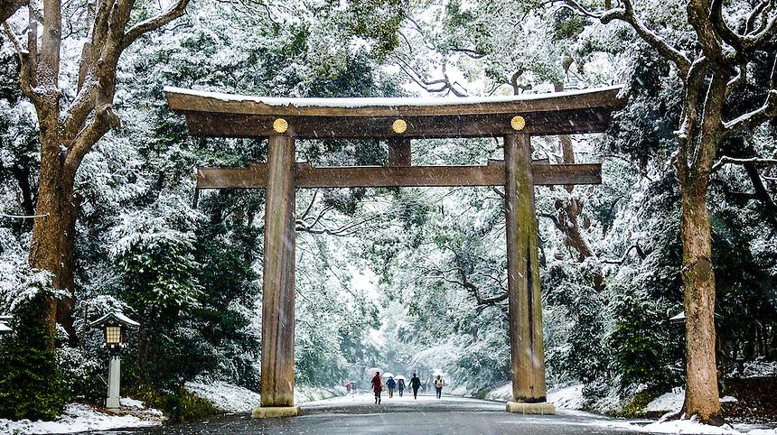 Tori in Tokyo snow.