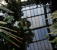 Tropical Rainforest Glasshouse (formerly Le Jardin d'Hiver or Winter Gardens), 1936, René Berger, Jardin des Plantes, Museum National d'Histoire Naturelle, Paris, France. View from above showing the glass and metal roof of the Art Deco style building reflected in the pool, which is surrounded by luxuriant Tropical plants.