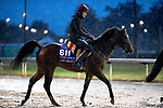 November 1, 2018: Lost Treasure (IRE), trained by Aidan P. O'Brien, exercises in preparation for the Breeders' Cup Turf Sprint at Churchill Downs on November 1, 2018 in Louisville, Kentucky. Alex Evers/Eclipse Sportswire/CSM