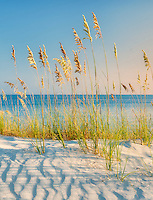 Sea Oat Grass.Turks and Caicos. Providenciales.