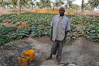 NIGER, Sahel, Zinder, village Baban Tapki, food security project by Caritas, vegetable garden  /NIGER Zinder, Projekte Ernaehrungssicherung im Dorf Baban Tapki, Gemuesegarten