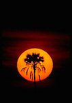 Palm & sunset, Botswana