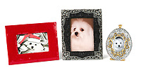 BNPS.co.uk (01202 558833)<br /> Pic: Juliens/BNPS<br /> <br /> Taylors beloved Maltese Terrier Sugar.<br /> <br /> A spectacular collection of over 1,000 items charting Elizabeth Taylor's life including her iconic outfits are up for sale for over £1million. ($1.25million)<br /> <br /> Dozens of designer gowns, fur coats and capes are being auctioned by the trustees of the estate of the late English actress.<br /> <br /> Also going under the hammer are the Hollywood icon's stylish wigs, scarves, shoes and jewellery.<br /> <br /> Items of her lavish furniture from her luxury homes across the world, right down to her personalised salt and pepper shaker, are included.
