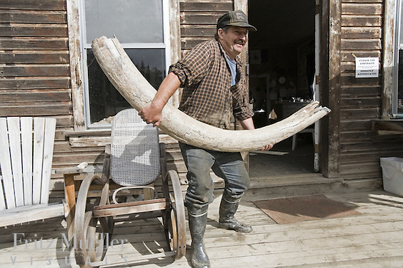 Mammoth tusk found at placer mine in the Klondike near Dawson City, Yukon