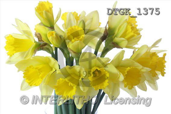Gisela, FLOWERS, photos(DTGK1375,#F#) Blumen, flores, retrato