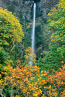 738600017 trees in fall color frame multnomah falls in the columbia river gorge national scenic area of northern oregon