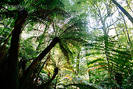 Image Ref: YR179<br />