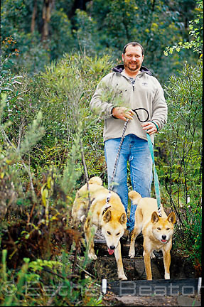 Eastern Quoll keeper and cafe owner, walking his dingoes, Lithgow, New South Wales