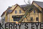 Tree falls on O'Donnells in Mounthawk.