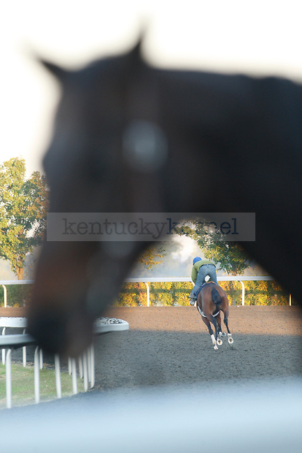 trainers ride horses on the Keeneland race track early Wednesday morning, Oct. 5, 2011. Photo by Brandon Goodwin | Staff