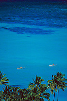 Kayaking in the calm blue ocean off Oahu with the tops of coconut palms in the foreground.