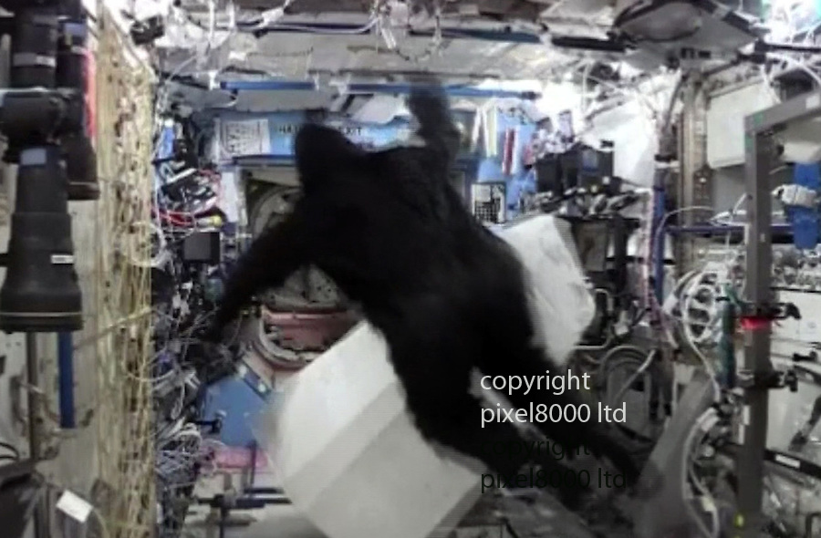 Pic shows: Space prank as British astronaut Tim Peake gets chased by  Scott Kelly dressed in a gorilla suit.<br /> <br /> <br /> <br /> Picture by Pixel8000 07917221968