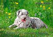 Marek, ANIMALS, REALISTISCHE TIERE, ANIMALES REALISTICOS, dogs, photos+++++,PLMP2906,#a#, EVERYDAY