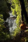 D'alton waterfalls in rainforest..cascades de D'alton dans la forêt humide