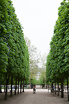 Row of trees, Tuileries Gardens (Jardin des Tuileries) in spring, Paris, France, Europe