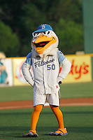 Myrtle Beach Pelicans mascot Splash Pelican (50) during a game against the Salem Red Sox at Ticketreturn.com Field at Pelicans Ballpark on April 10, 2016 in Myrtle Beach, South Carolina. Salem defeated Myrtle Beach 4-3. (Robert Gurganus/Four Seam Images)