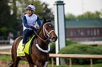 LOUISVILLE, KY - MAY 02: Firenze Fire gallops in preparation for the Kentucky Derby at Churchill Downs on May 2, 2018 in Louisville, Kentucky. (Photo by Alex Evers/Eclipse Sportswire/Getty Images)