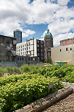 CANADA, Vancouver, British Columbia, community garden in the middle of the city on West Hastings Street