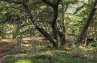 Forest, Washington