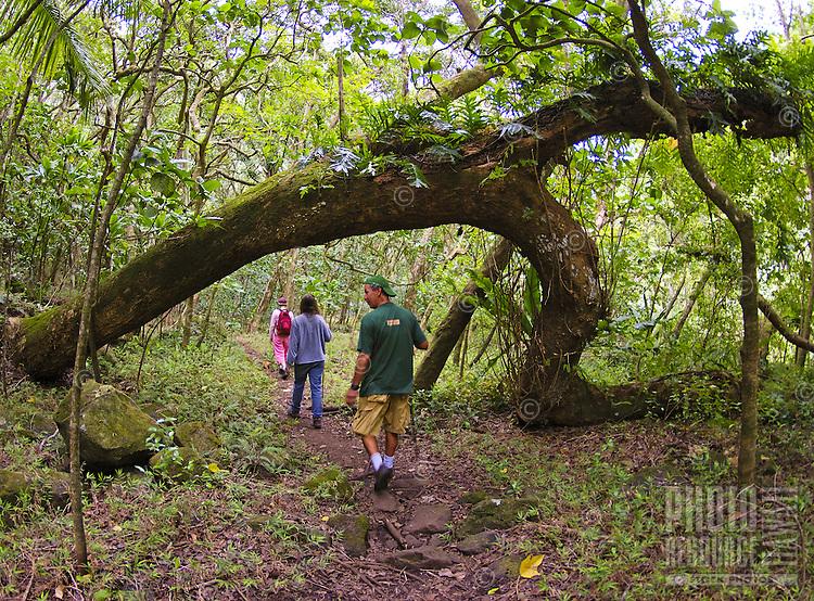 Hiking through the tropical rainforest on the Halawa Falls Trail, Molokai